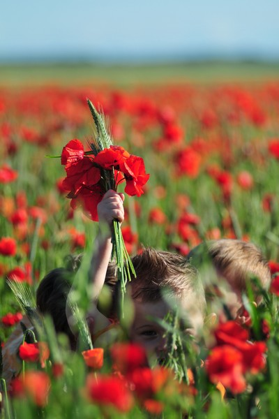Poppy fragrance somme tourisme when women pushed for poppies a symbolic flower mightylinksfo