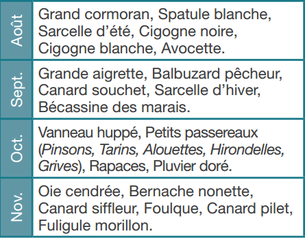 marquenterre-calendrier-des-migrations03.png